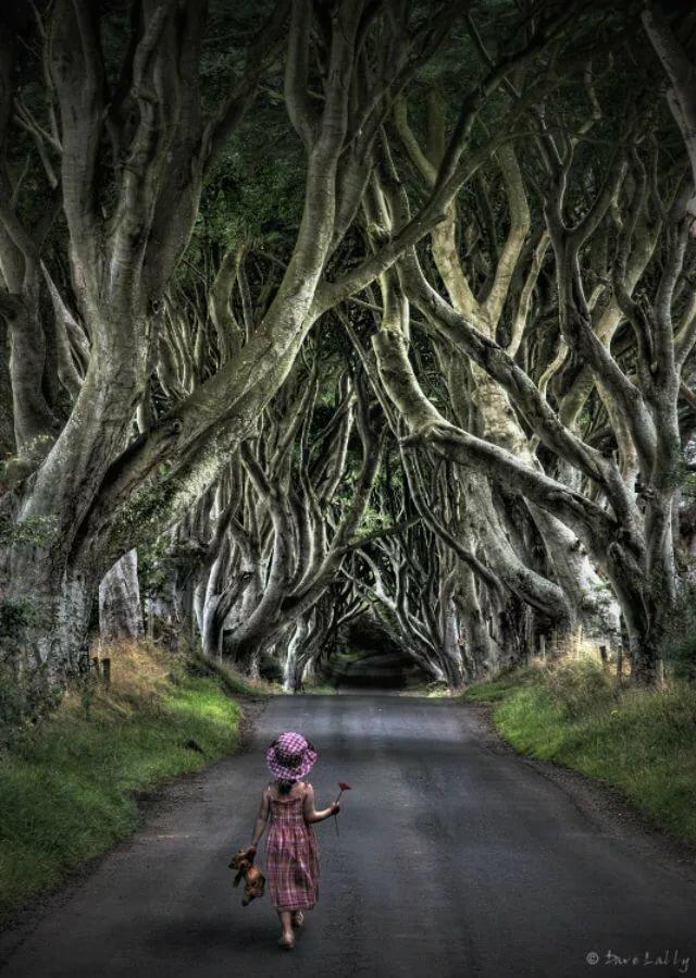 фото таинственный лес северная ирландия ознакомления