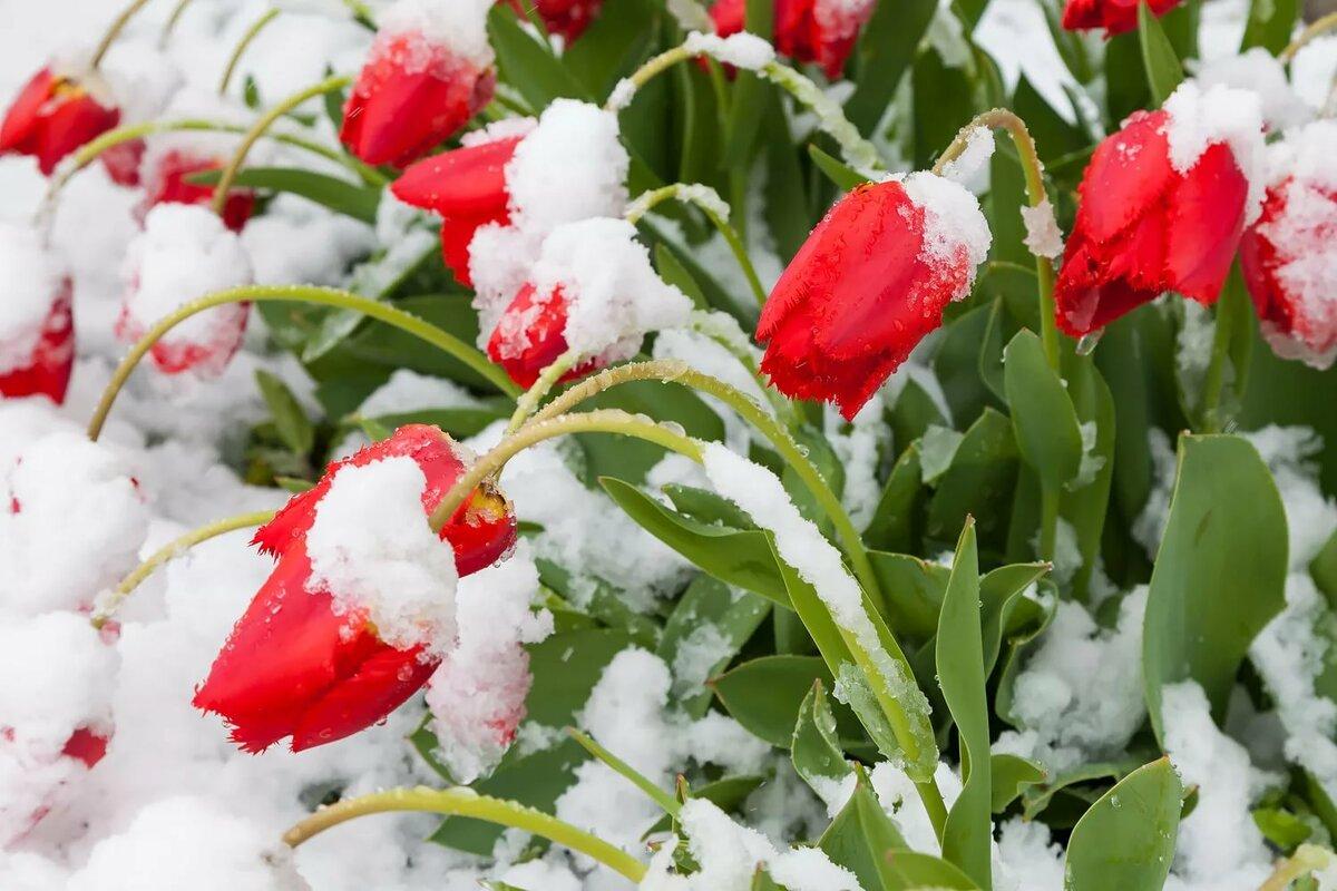 сайт любое картинки на весь экран цветы под снегом фотограф-инвалид снимала своих