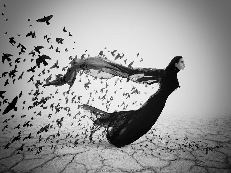 ульяновске черно белые картинки птицы из спины можно