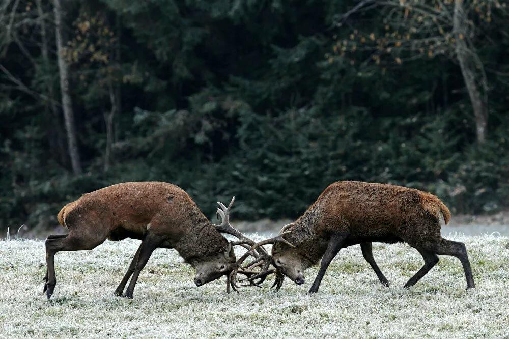 Strippers in red deer