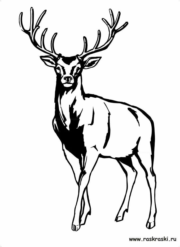 Картинки оленя черно белые