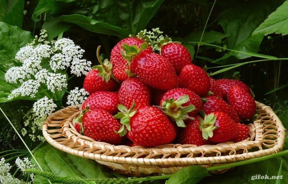 Гифы ягоды, будь