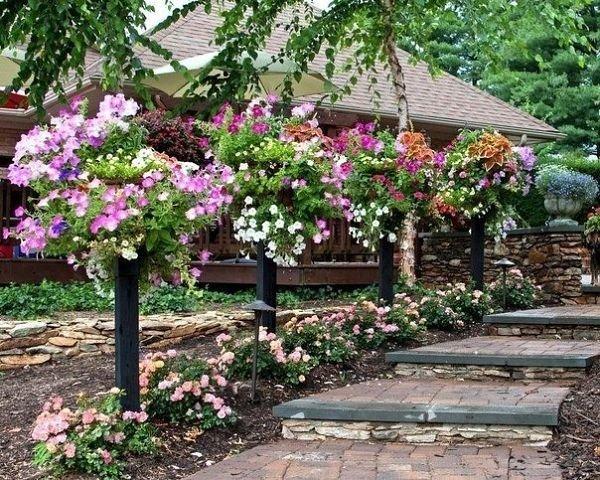 Фото цветов на усадьбе