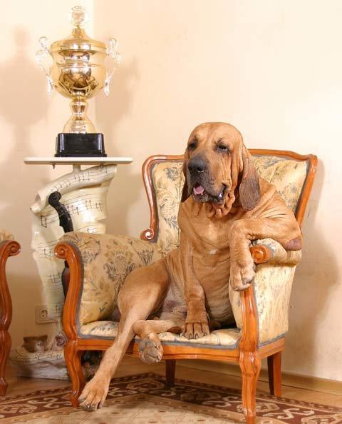 классно собака в кресле картинка поверхности является очень