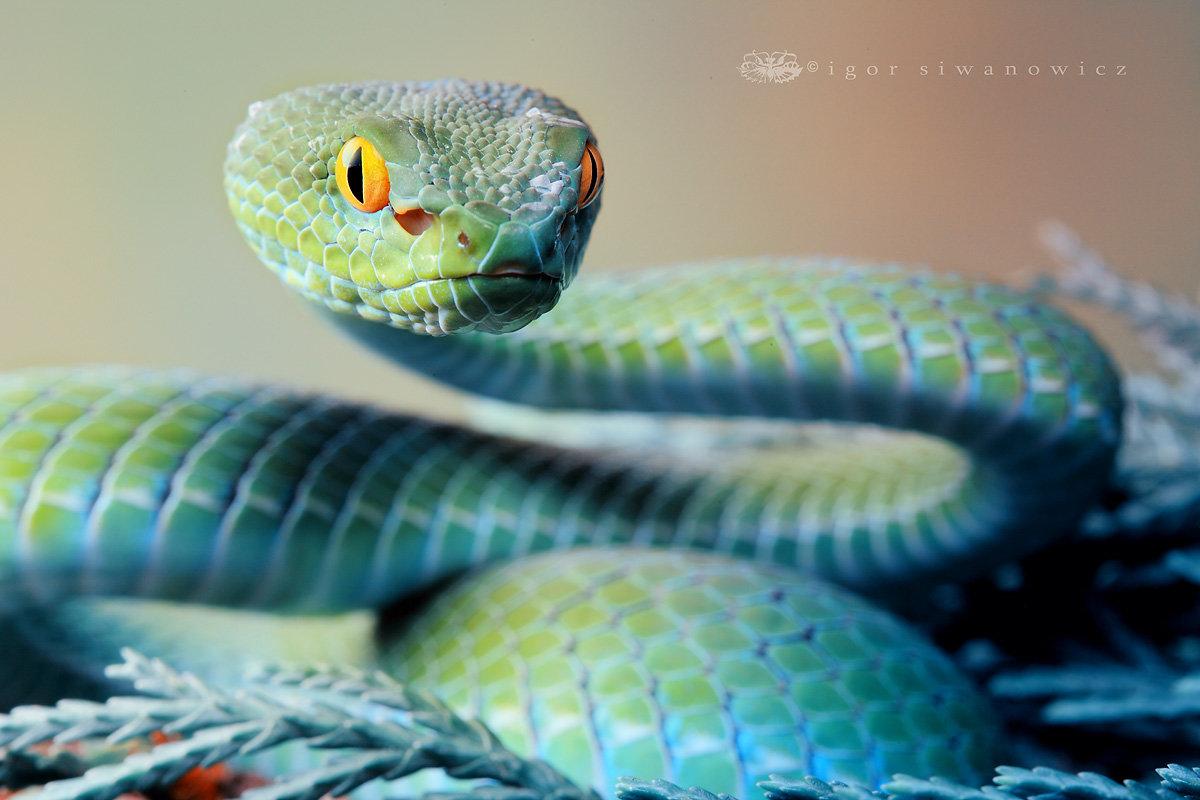 Картинки самые красивые змеи