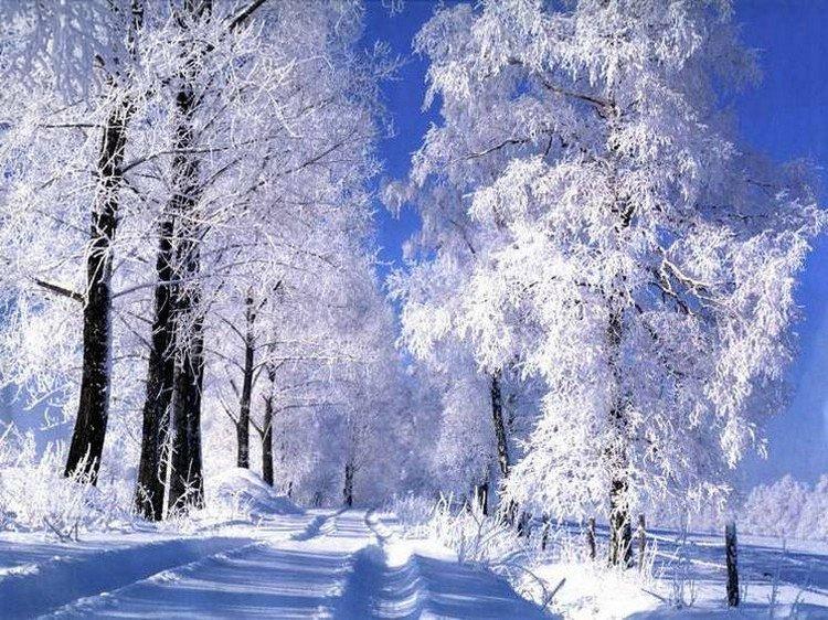 Картинки январь природа, поздравление