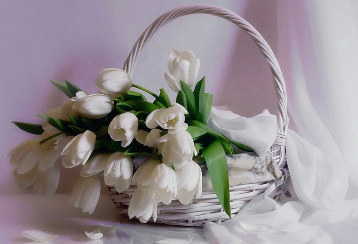 Поздравления с днем рождения тюльпаны картинки, открытку для