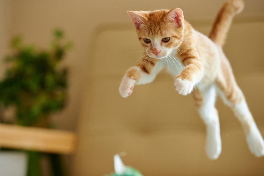 Картинки и видео про кошек смешное