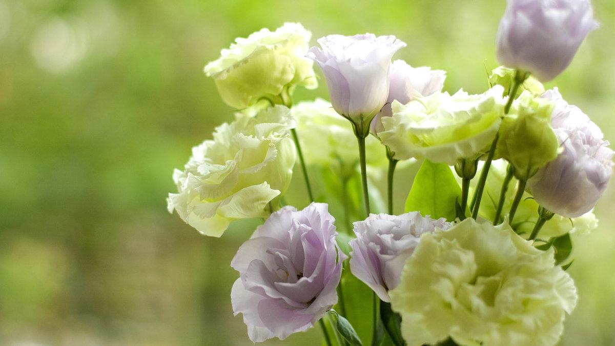 Лучший, картинки на рабочий стол цветы нежные