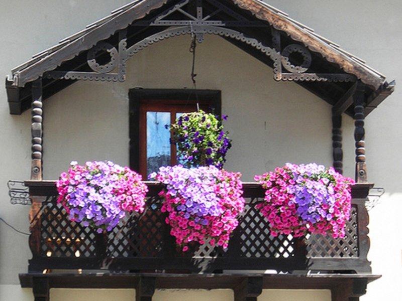 """Величие цветов украсят любой балкон"""" - карточка пользователя."""