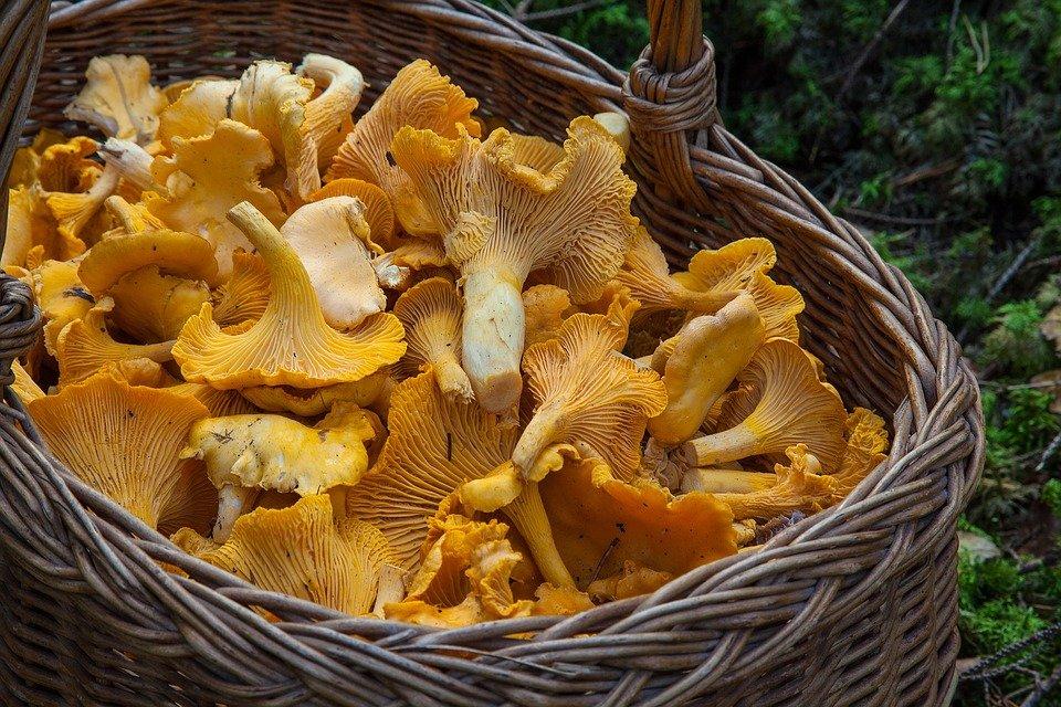 Корзинка для грибов.