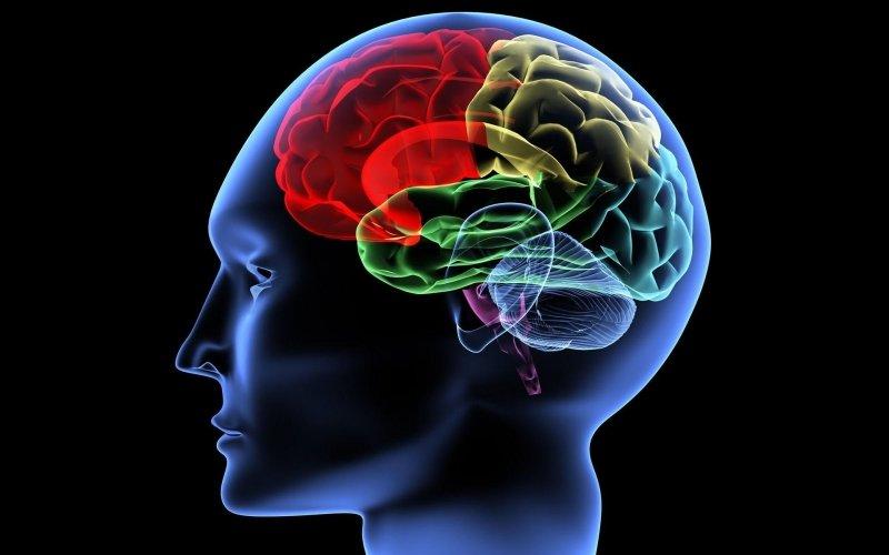 Чем уникален наш мозг? / Наука / iFAQ - Интересные факты и вопросы