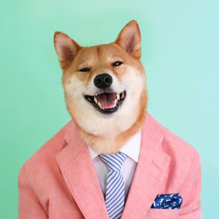 Даппер - модный пёс-блоггер). Обсуждение на LiveInternet - Российский Сервис Онлайн-Дневников