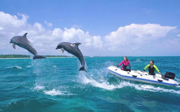 Дельфины у берегов багамских островов