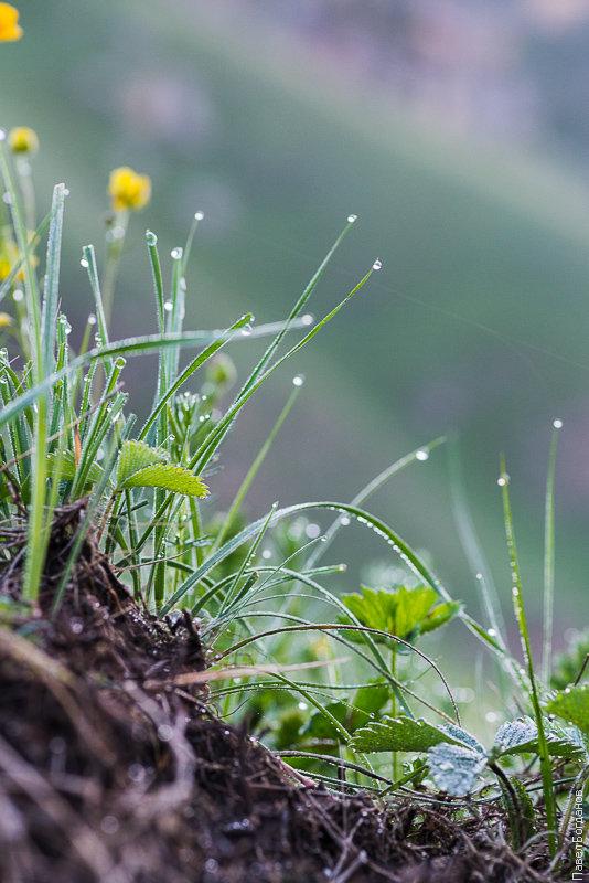 Фото растений в утренней росе