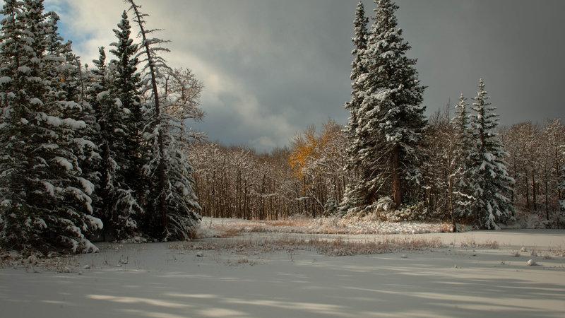 хвойный лес зимой  FullHD Фото Картинки Обои 1920x1080  28768 FullHD-Фото