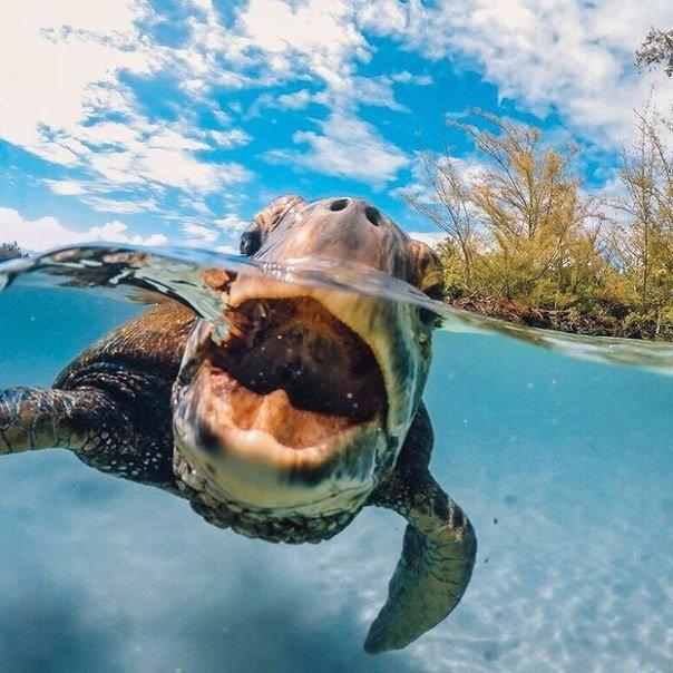 Лучшие фотографии за 2015 год по версии GoPro | uDuba.com