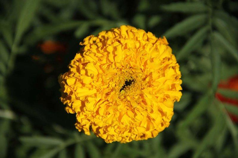 Полевые цветы, макро