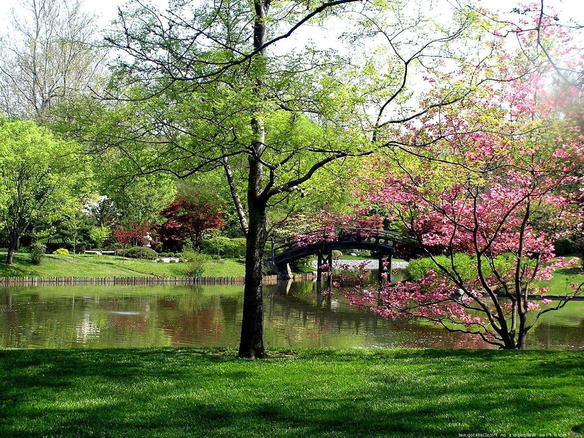 Картинки красивая природа весна