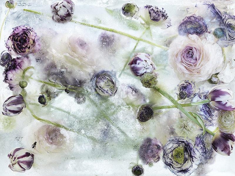 Цветы, замороженные во льду