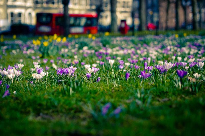 весна город  Весна Цветы Природа 7 Весна
