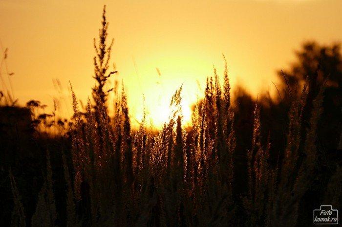 Заходящее солнце интересно подсвечивает траву