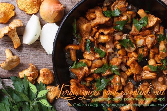 Специи для грибов, самые лучшие специи для жарки, маринования, соления грибов. Как правильно использовать специи для грибов, секреты шеф-поваров