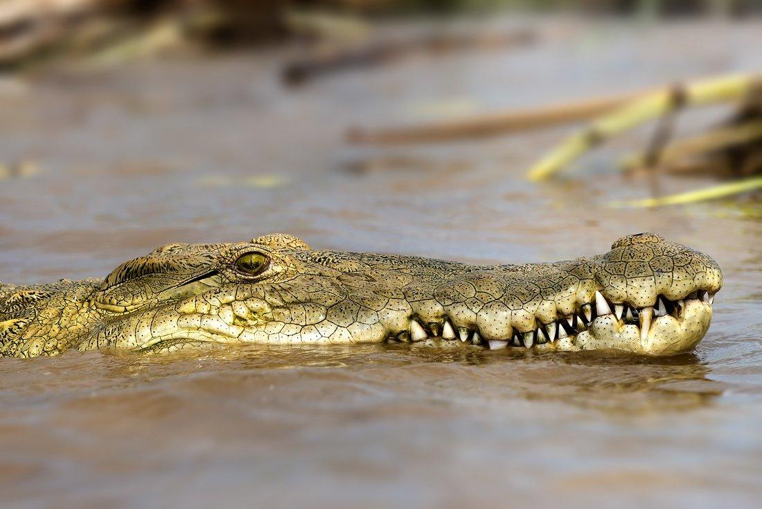 швейные картинка крокодил в африке меня здесь еще