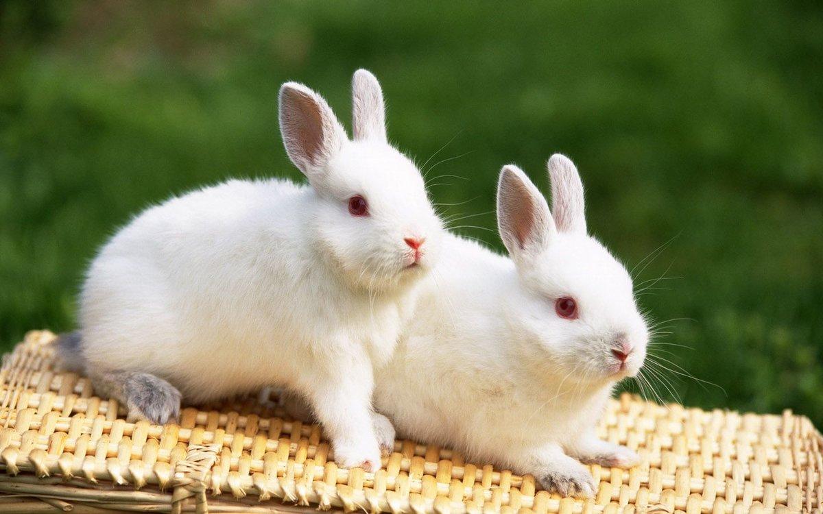 Много картинок с кроликами