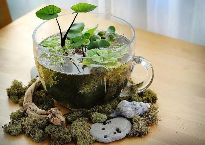 Комнатные растения - какие  выбрать для кухни: [b]Мини-огород на подоконнике[/b]    Съедобные растения на кухне пригодятся, как никакие другие, ведь их можно выращивать круглый год