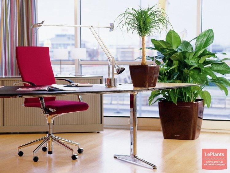 """Растения, очищающие воздух в квартире - """"Растения в доме"""" :: читать на сайте LePlants.ru"""