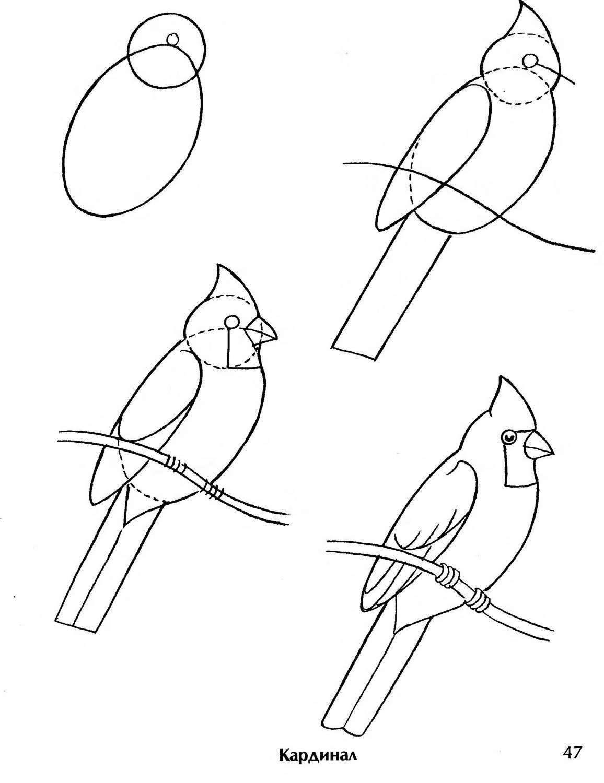 Рисунок птицы карандашом для детей
