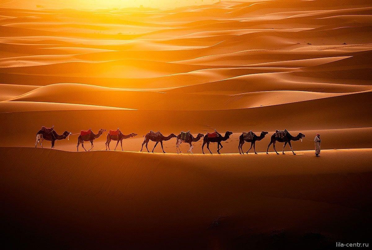 Картинки верблюдов караван