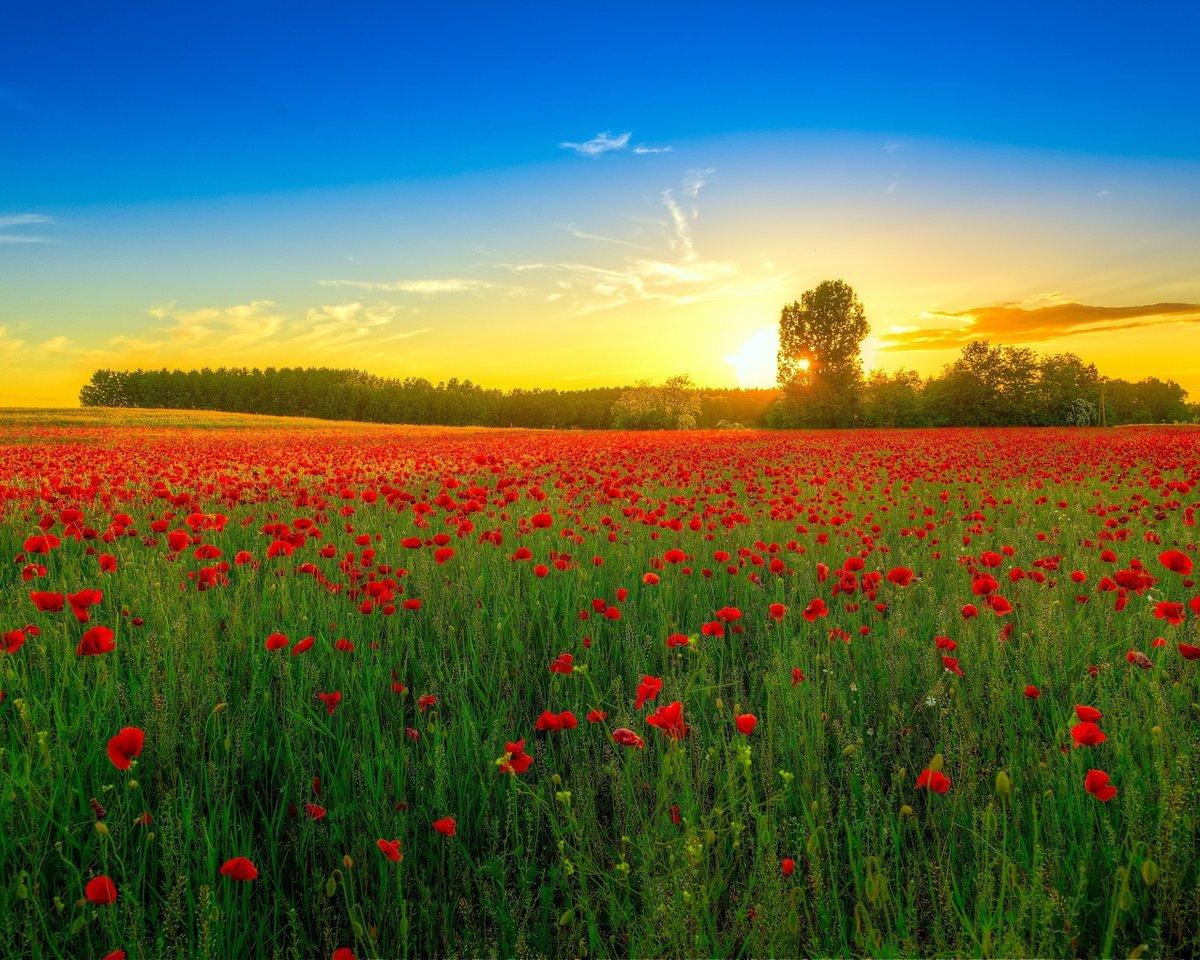 Картинки природа поле цветов