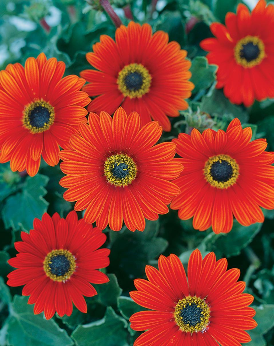 семье сегодня цветы на букву г садовые фото поделюсь вами
