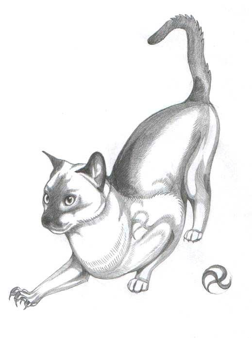 ПРО ТАТУ Студия художественной татуировки - Женские эскизы Кошки