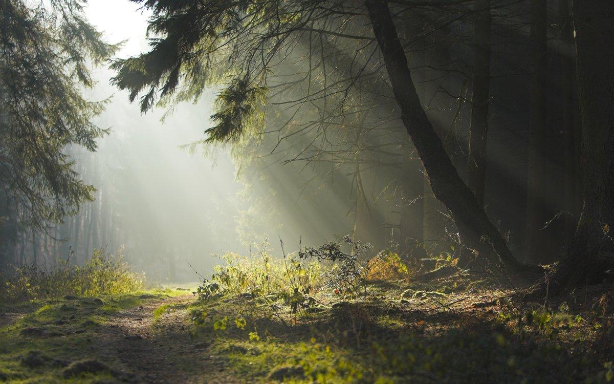 Весенний лес в утреннем тумане.