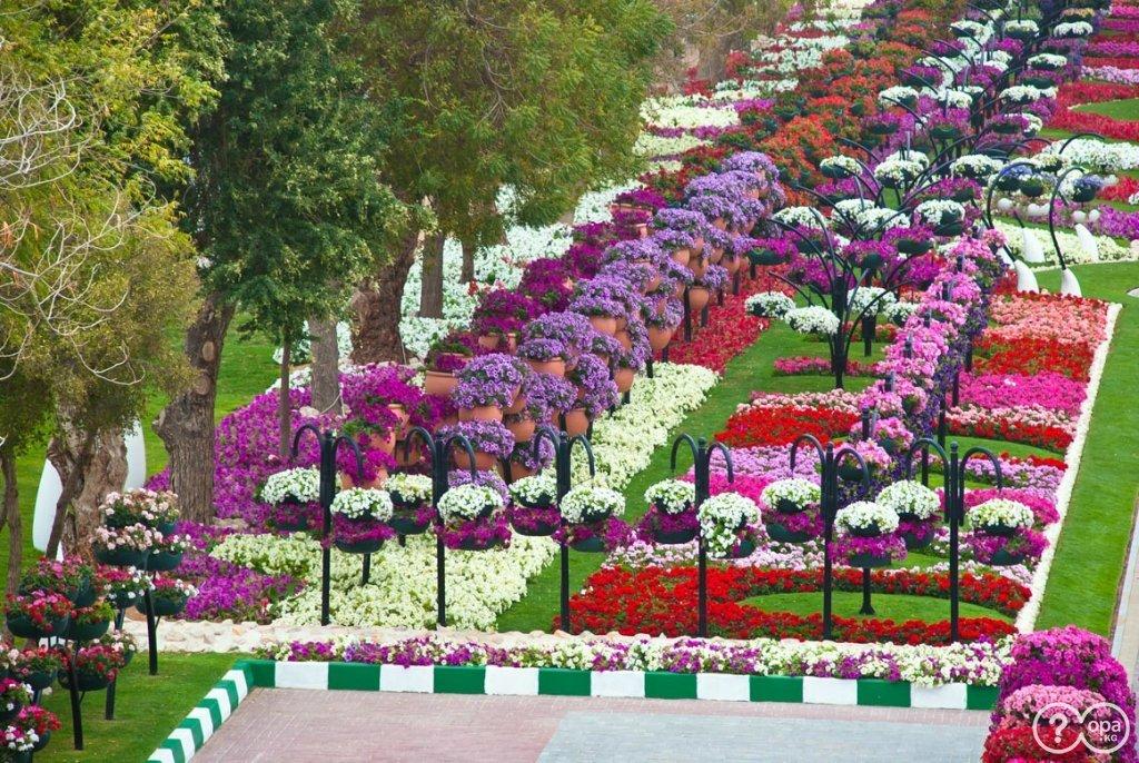 бесплатно широкоформатные фото городских цветочных аллей вот бриллиант