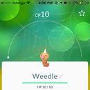 #013 - Weedle #014 - Kakuna #015 - Beedrill