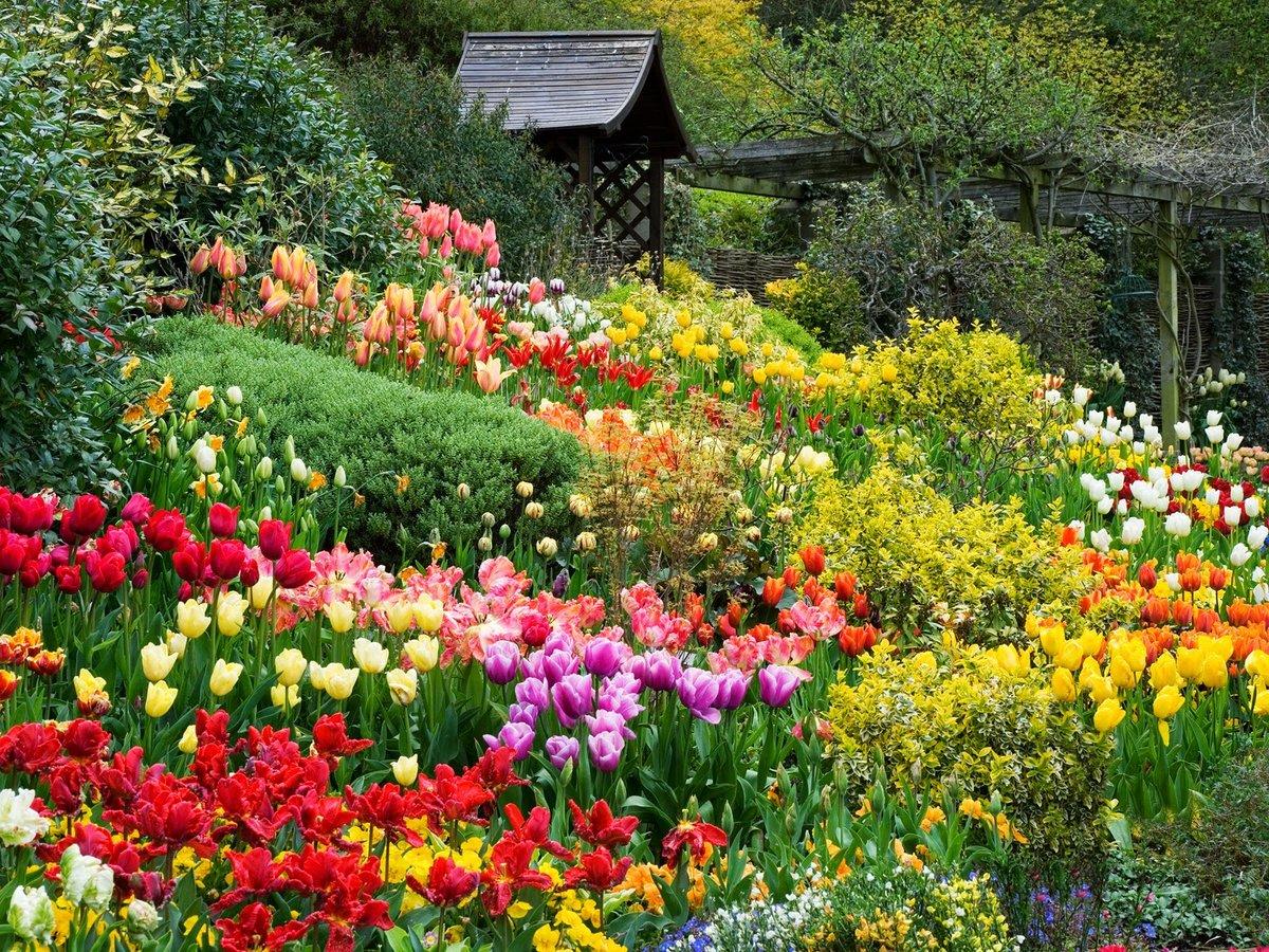 картинки цветов мой сад слоеного