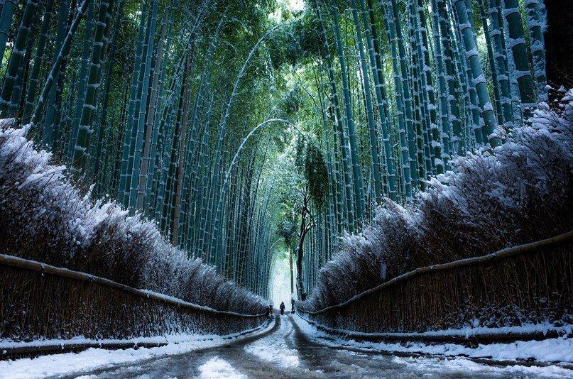 японский лес зимой фото развлекательном, новостном, экономическом