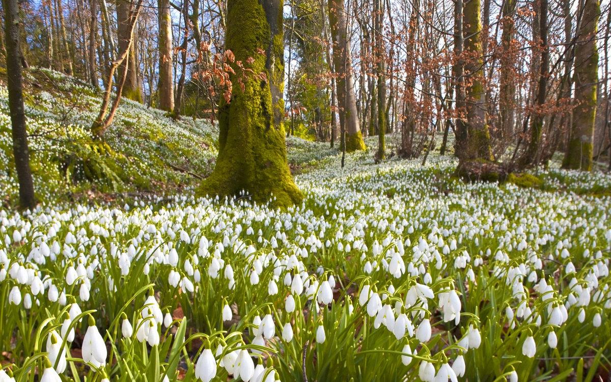 Елены картинке, картинки времена года весна