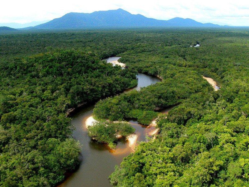 Леса амазонки картинка