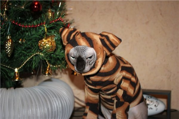 Новогодние костюмы для собак и котов