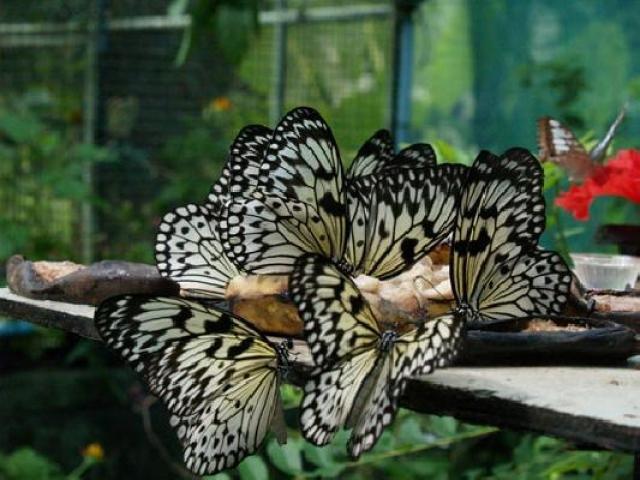 серы сад бабочек пхукет отзывы сахара анализе крови