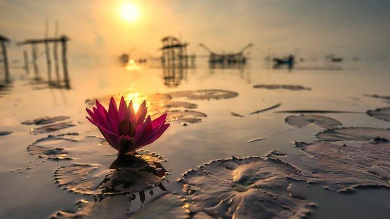 прекрасная страна, как нарисовать отражение солнца утром в воде интернет магазин каталог