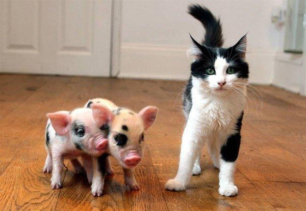 Это что за свинство?