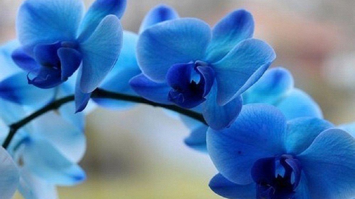 Картинка, орхидея картинки красивые