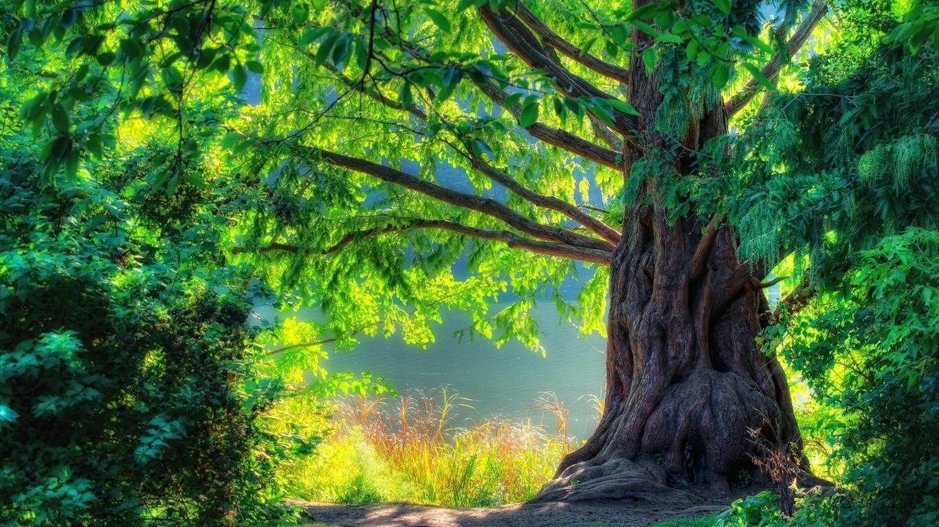 красивые лес фото