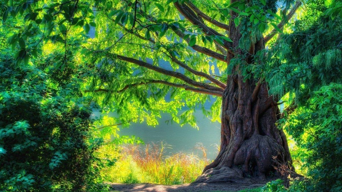 Картинки по запросу красивый лес